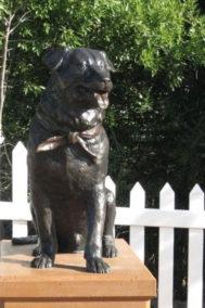 Bosco the Dog Mayor
