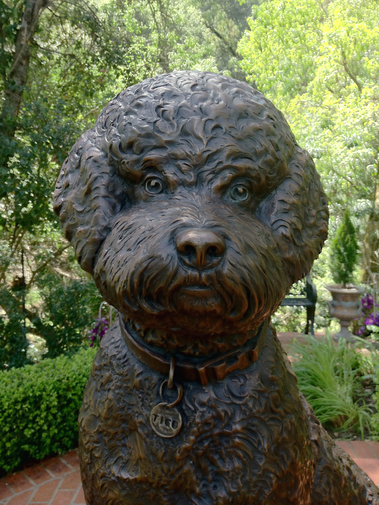 Closeup of Tigo a bronze custom dog statue portrait