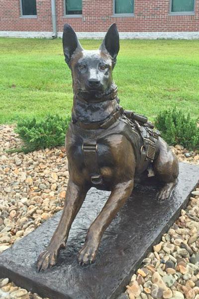 MARSOC K9 Belgian Malinois Life-size Bronze Statue at Camp Lejeune, sculptor Lena Toritch